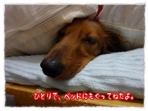 2012_11_21_2.jpg