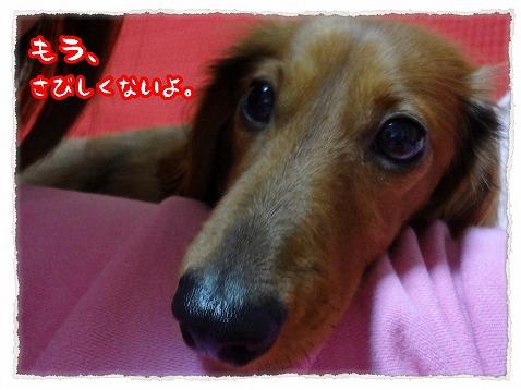 2012_11_22_3.jpg