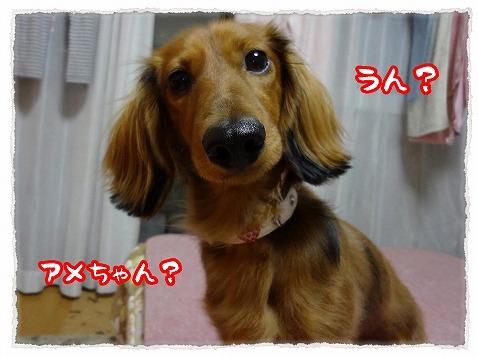 2012_11_23_1.jpg
