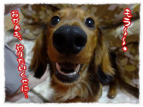 2012_11_23_4.jpg