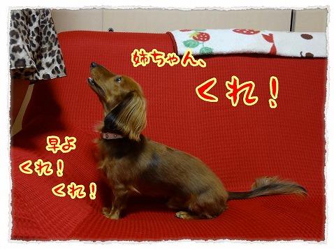 2012_11_24_1.jpg