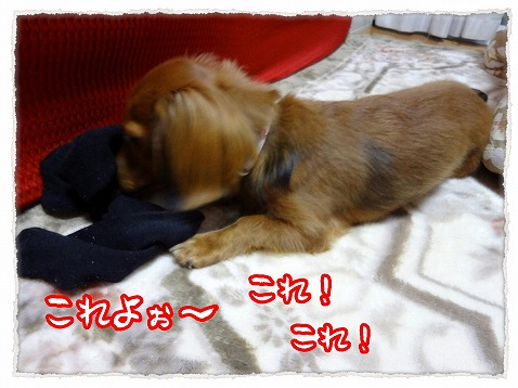 2012_11_24_2.jpg
