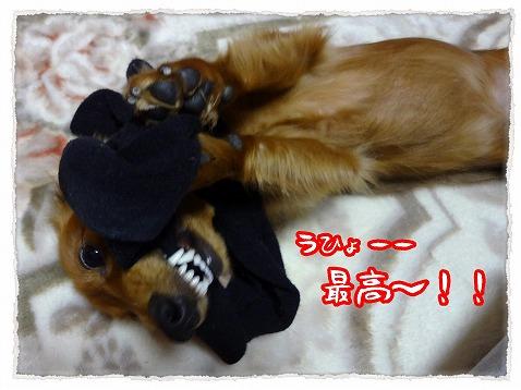 2012_11_24_4.jpg