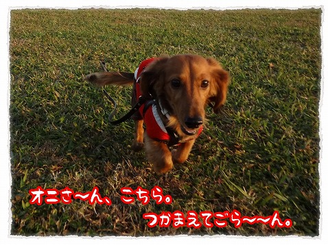 2012_11_25_3.jpg