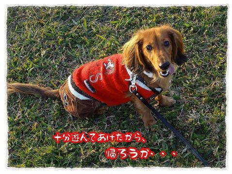 2012_11_25_4.jpg