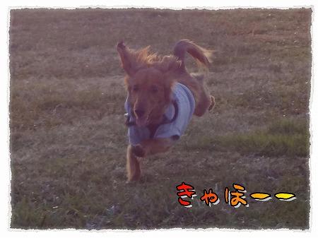 2012_11_26_1.jpg