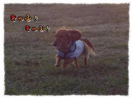 2012_11_26_2.jpg