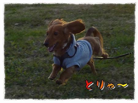 2012_11_26_3.jpg