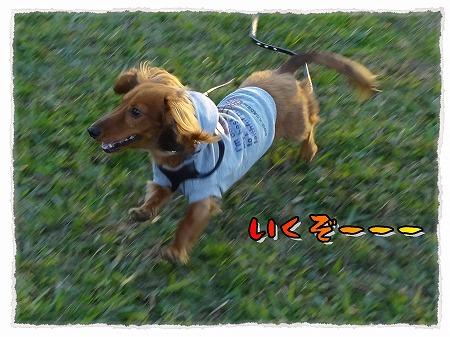 2012_11_26_4.jpg