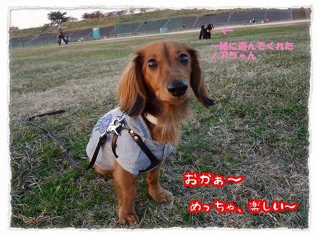 2012_11_26_5.jpg