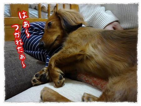 2012_11_26_6.jpg
