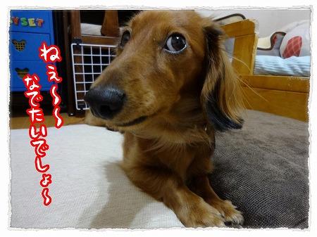 2012_11_27_2.jpg