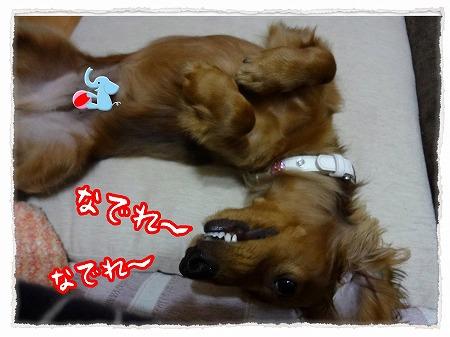 2012_11_27_3.jpg