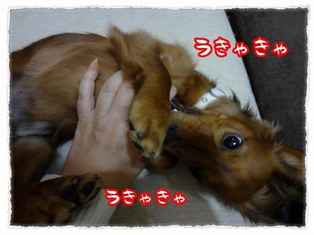 2012_11_27_4.jpg