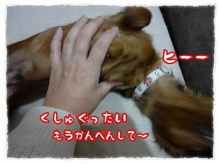 2012_11_27_5.jpg