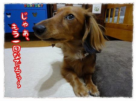 2012_11_27_7.jpg