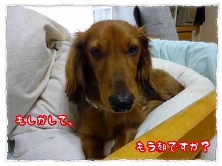2012_11_28_2.jpg