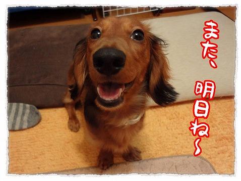 2012_11_29_1.jpg