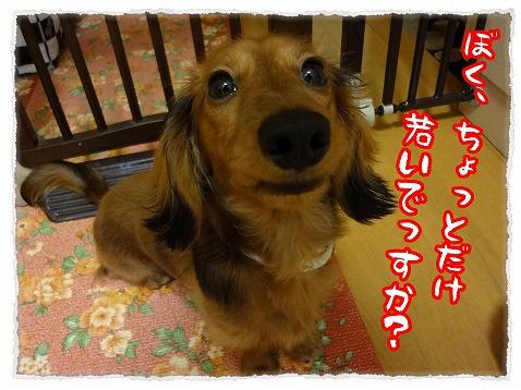 2012_11_29_2.jpg