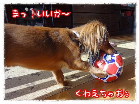 2012_11_2_3.jpg