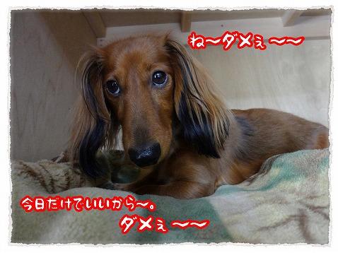 2012_11_4_3.jpg