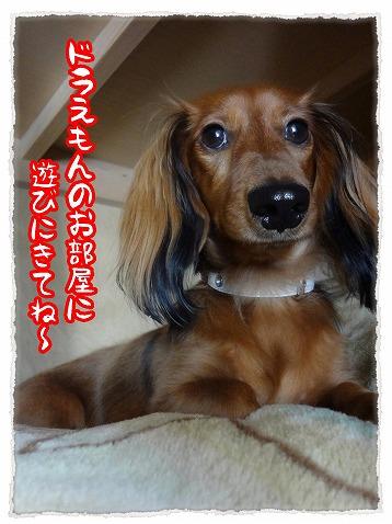 2012_11_4_4.jpg