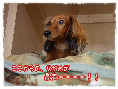 2012_11_4_5.jpg