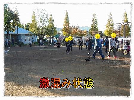 2012_11_5_2.jpg
