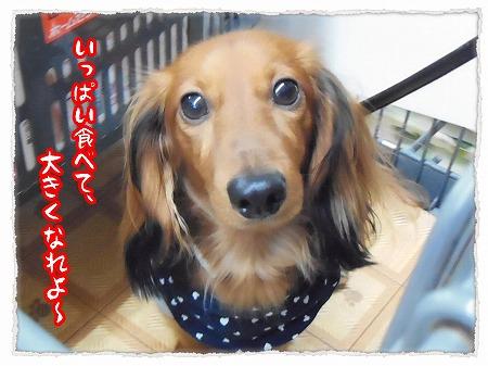 2012_11_5_8.jpg