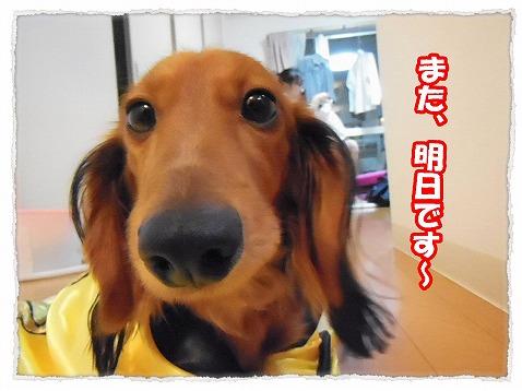 2012_11_6_3.jpg