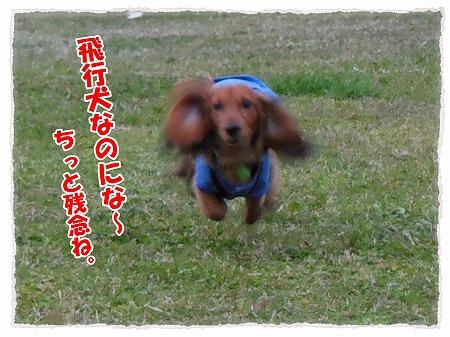 2012_11_7_2.jpg