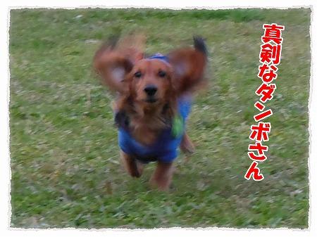 2012_11_7_3.jpg