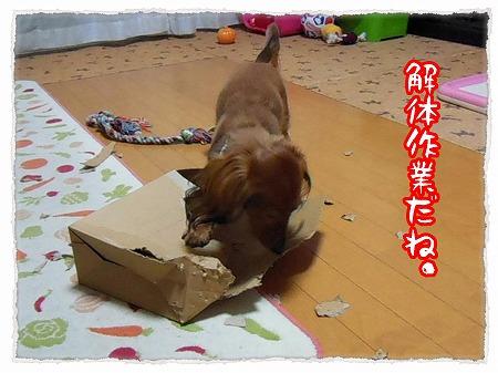2012_11_7_6.jpg