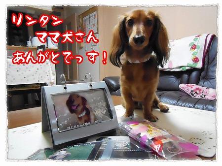 2012_11_9_2.jpg