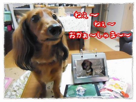 2012_11_9_3.jpg