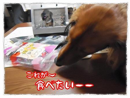 2012_11_9_4.jpg