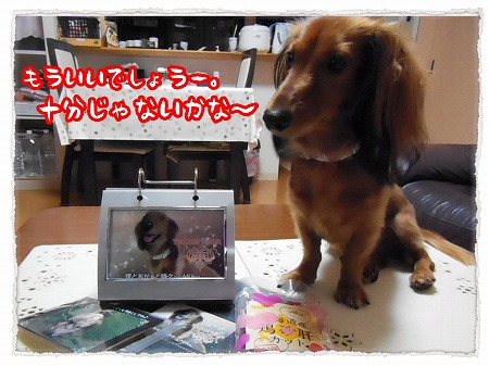 2012_11_9_5.jpg