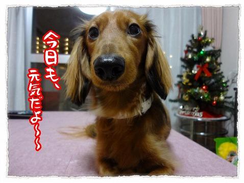 2012_12_11_1.jpg