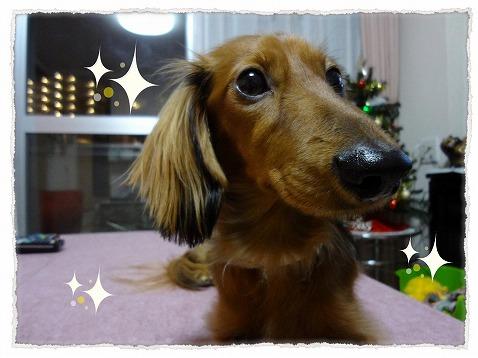 2012_12_11_3.jpg