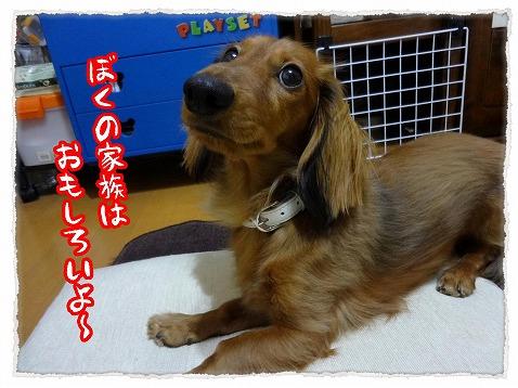 2012_12_12_6.jpg