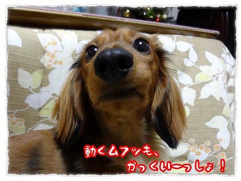 2012_12_14_2.jpg