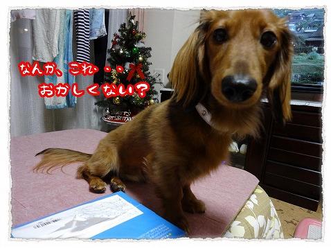 2012_12_15_2.jpg