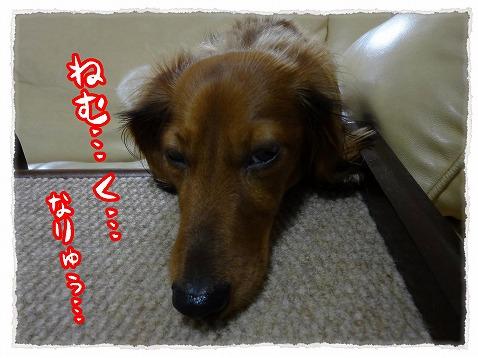2012_12_17_5.jpg