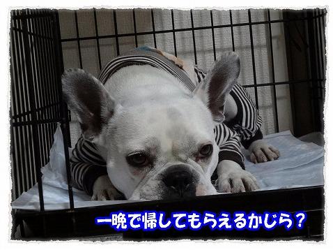 2012_12_17_7.jpg