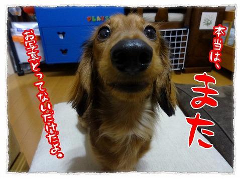 2012_12_18_2.jpg