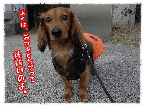 2012_12_20_4.jpg