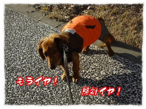 2012_12_20_5.jpg