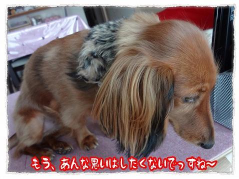 2012_12_27_5.jpg