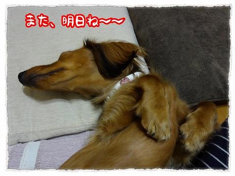 2012_12_28_4.jpg