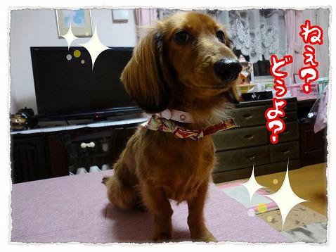 2012_12_30_1.jpg